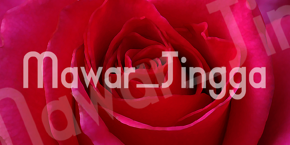 MAWAR_JINGGA